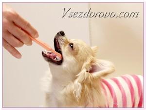 как почистить собаке зубы фото