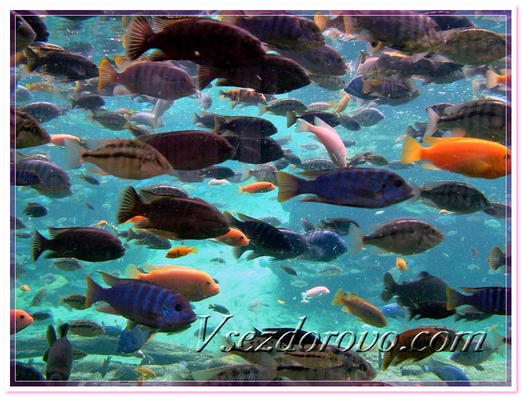 Морские рыбы фото