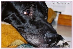 пёс с грустными глазами фото