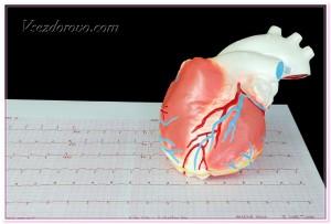 сердце и кардиограмма фото
