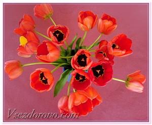 весенние тюльпаны фото