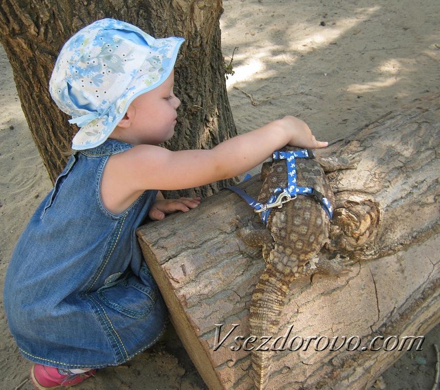 Капский варан и ребенок
