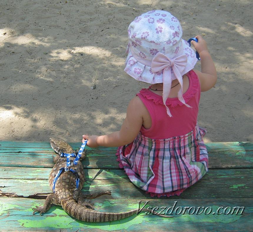 На улице вараны очень любят погреться на солнышке