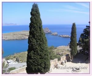Кипарис фото