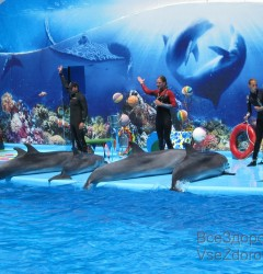 dolphin (10)
