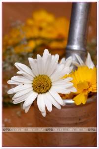 Цветы в ступке фото