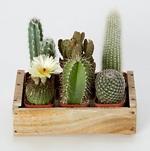 Как правильно ухаживать за кактусом
