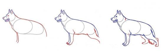 Как нарисовать морду собаки