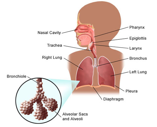 Причины возникновения пневмонии у детей