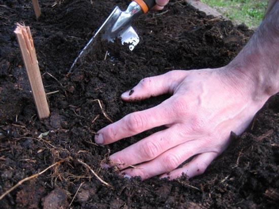 Лунный календарь садовода и огородника 2015