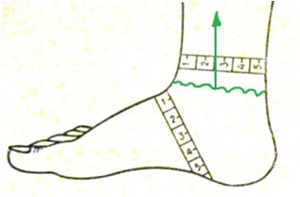 Как сделать обмер ноги