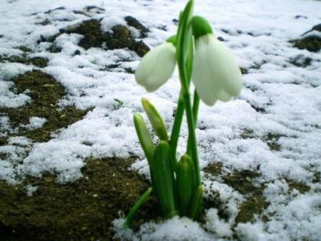 Какая будет весна 2015, прогноз погоды