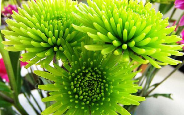 Какие цветы мятного оттенка