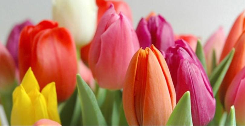 Оригинальные и прикольные поздравления с 8 марта женщинам