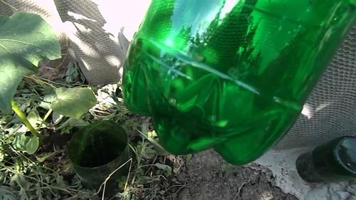 Полив огурцов в теплице и в грунте — как правильно это делать. Простой способ капельного полива растений из пластиковых бутылок