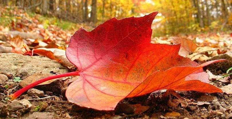 Красивые песни об осени для подростков и детей начальной школы. Музыкальные произведения про осень для детского сада