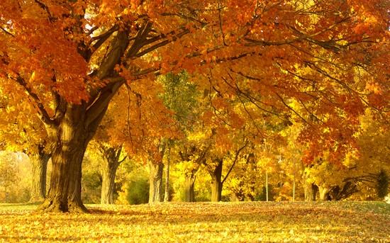 Стихи про осень для школы и детском саду. Красивые и короткие четверостишия для детей