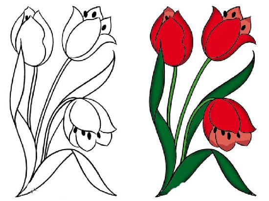 Фото цветов тюльпан