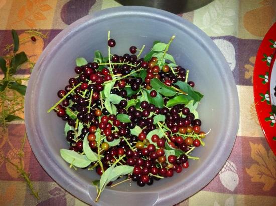Как сделать домашнее из черноплодной рябины 481
