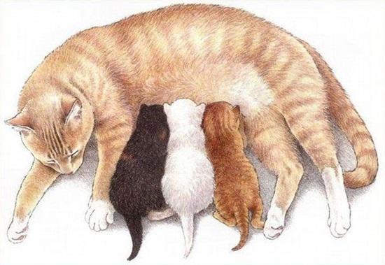 Как легко нарисовать мордочку кошки