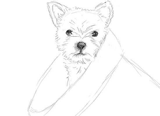 Как нарисовать собаку