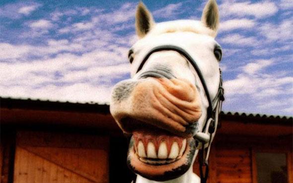 Прелестнейшие анекдоты для очаровательных улыбок