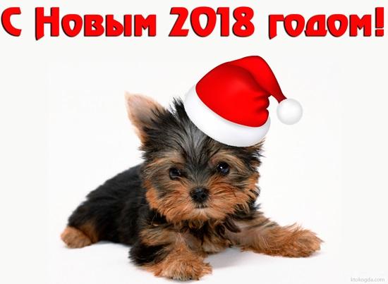 Поздравления коллегам на Новый 2018 год Собаки официальные и прикольные