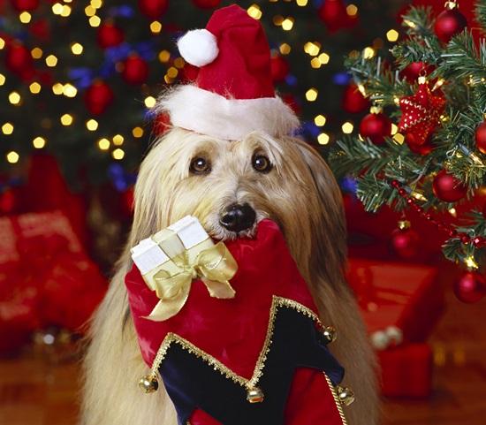 Лучшие открытки с Рождеством Христовым