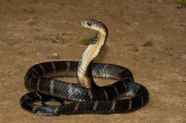 Сонник кормить змею, к чему снится