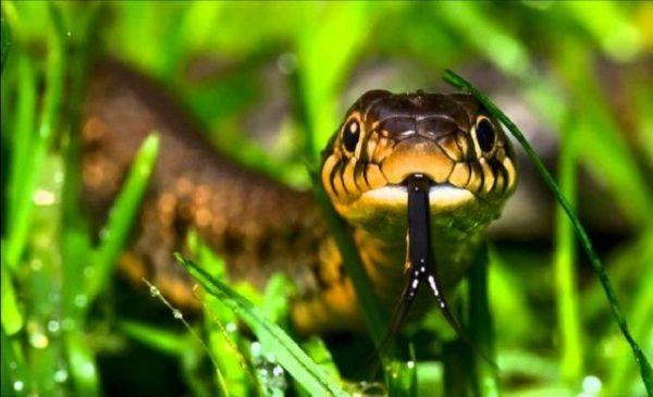 Сонник миллера толкование к чему снится змея