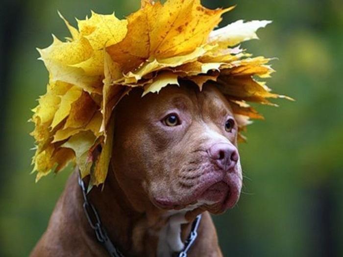 Красивые, смешные картинки и фото листьев