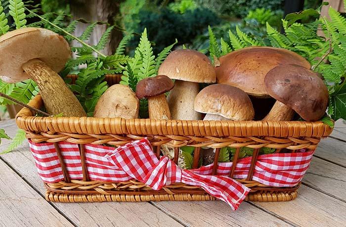 Белый гриб. Источник фото: pixabay.com