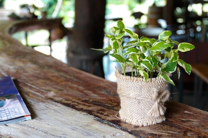 10 домашних растений, которые улучшают здоровье