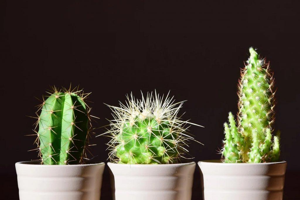 Топ 7 цветов, которые лучше не держать в доме, согласно фэн-шуй
