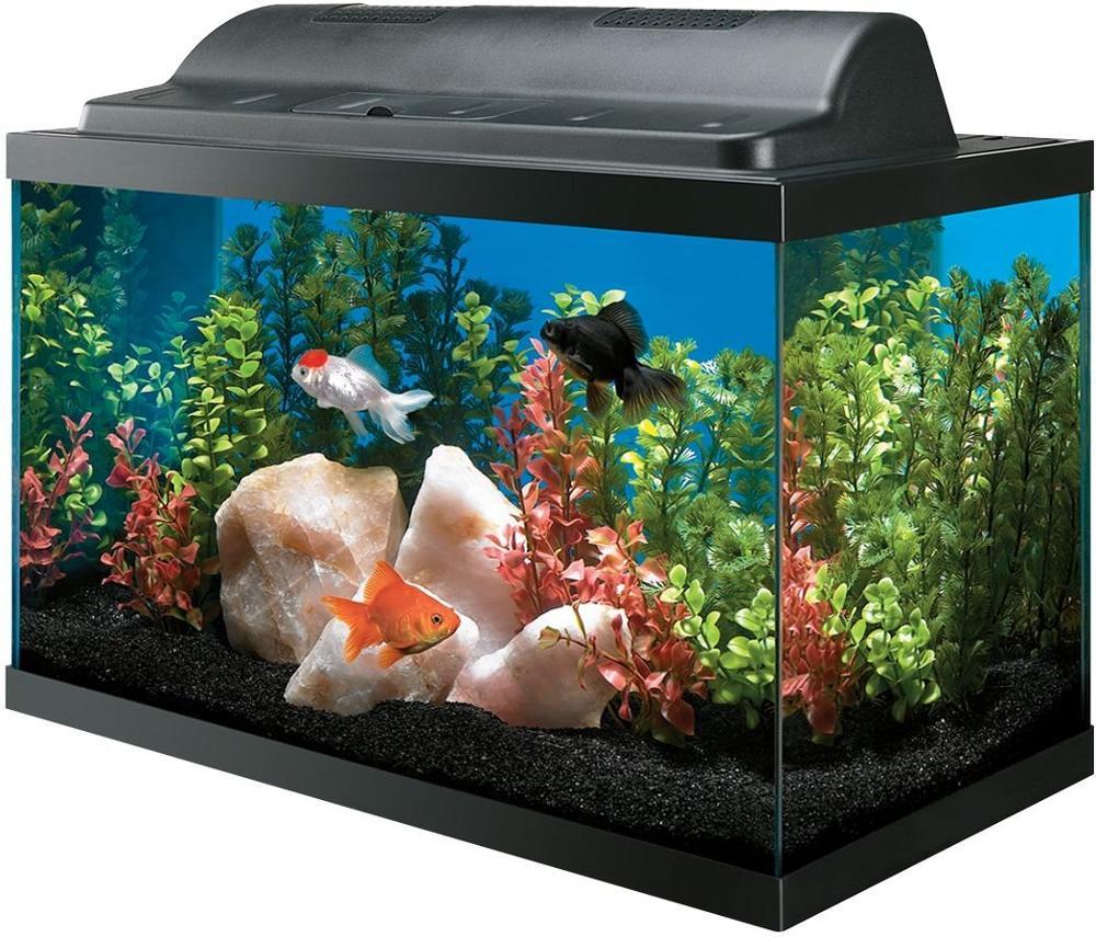 квадратные аквариумы картинки можно смело назвать
