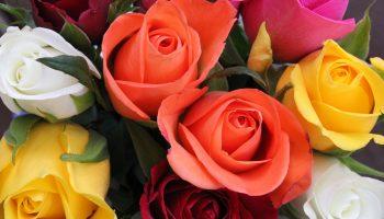 Загадайте желание, а выбранная роза расскажет, сбудется ли оно