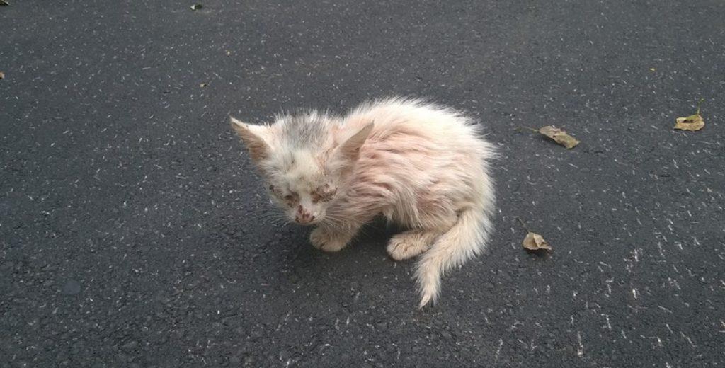 Девушка купила котенка в темноте и оказалось, что он серьезно болен