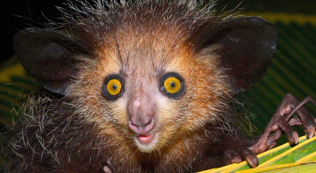 Необычные животные мира: что их отличает от остальных?