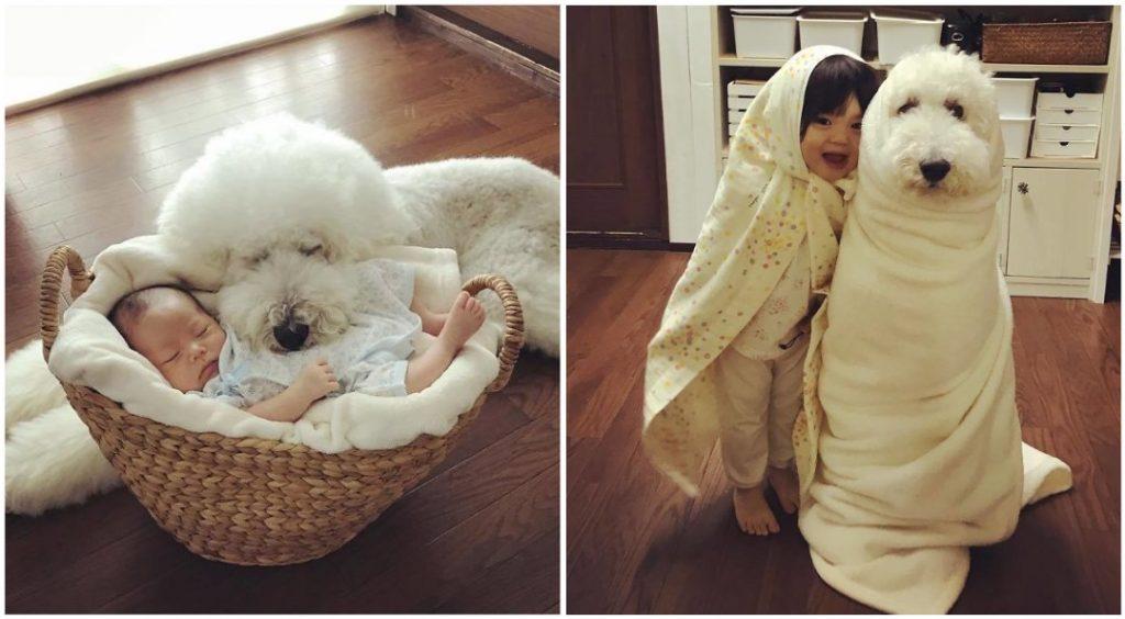 «Размер не имеет значения»: Японская семья рассказывает, что для малыша гигантский пудель верный друг и заботливая нянька