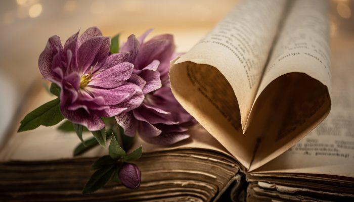 Литературные произведения с глубоким смыслом: 5 книг, которые могут многому научить