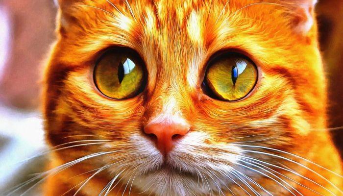 Возвращение блудного кота: встреча через 6 лет