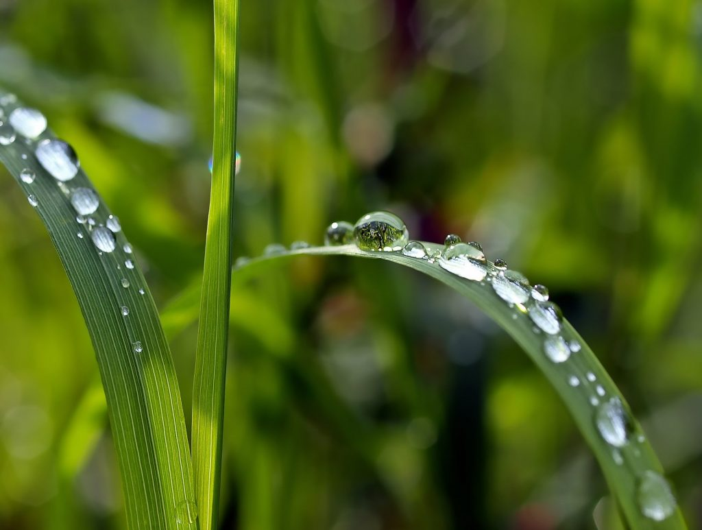 Память Николаю Чудотворцу – 22 мая: зачем в этот день умываться росой