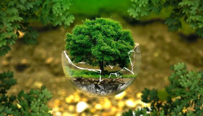 Психологический тест: какое дерево вам нравится? Результат покажет к какой работе вы предрасположены