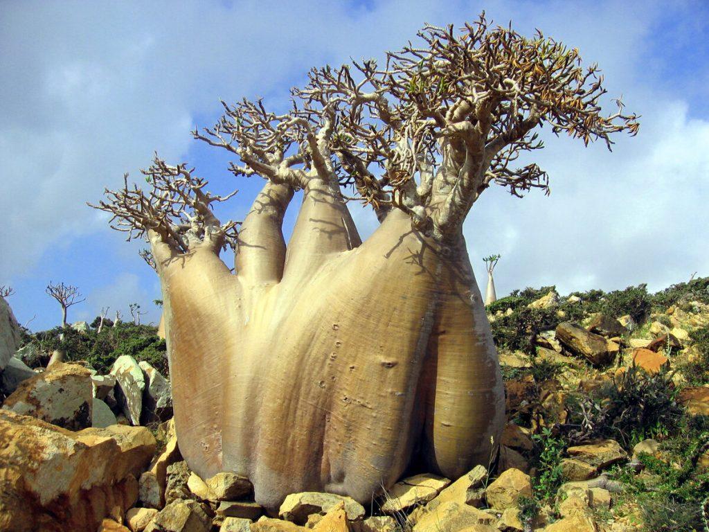 Уникальные растения планеты: подборка 5 удивительных растений со всего мира