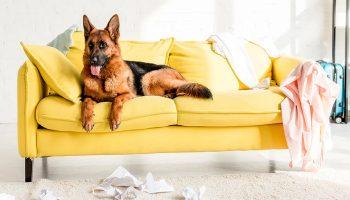 «Пока никто не видит»: девушка показала, что собака делает с ее одеждой, когда ее нет дома