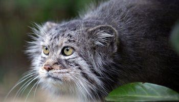 Фермер нашел в сарае четверых котят: они подросли и оказались дикими кошками