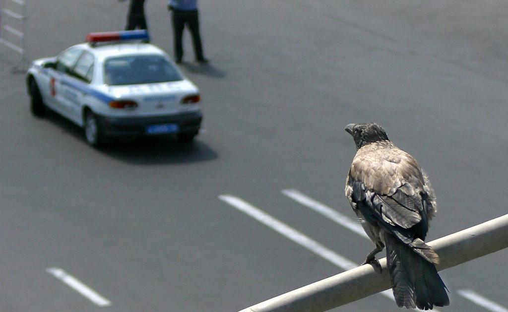 Мир, дружба, жвачка: история о том как ворона помогла ежику перейти дорогу