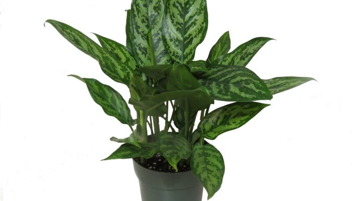 Домашние растения: польза и вред