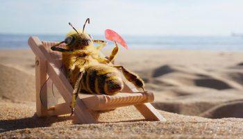 Головоломка: найдите пчелу среди множества цветочных бутонов