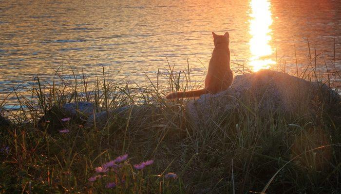Кот не уходил с речки, несмотря на боязнь воды: на рыбалке хозяева выяснили причину